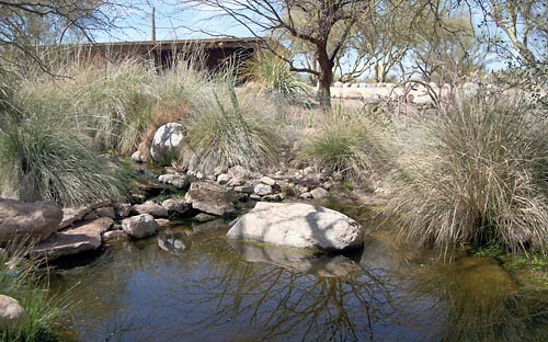 Building a Native Pond - FROG Conservation Project